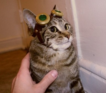 Trailer Kitty