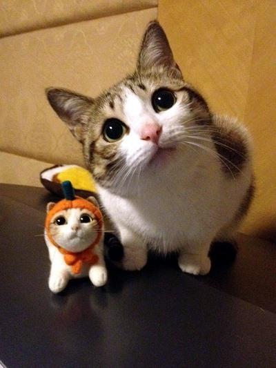 trailer kitty 2