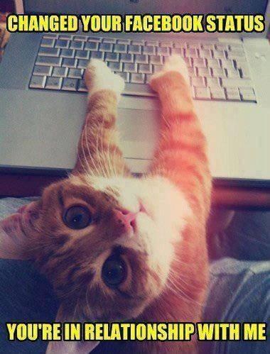 facebook trailer kitty