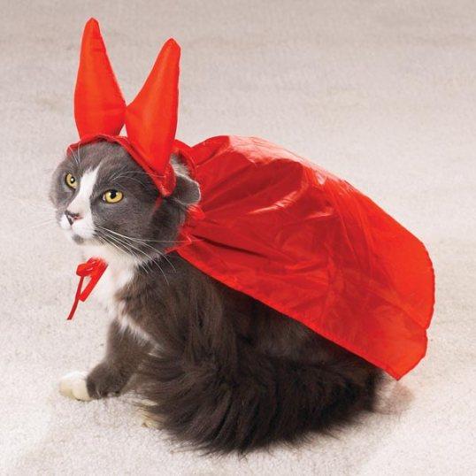 Halloween Trailer Kitty
