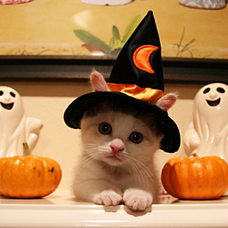 Witch Trailer Kitty
