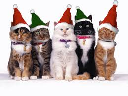Christmas Trailer Kitties
