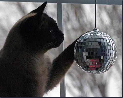 disco trailer kitty