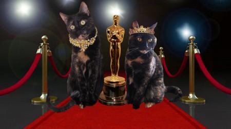 oscar trailer kitties