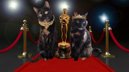 oscar trailer kitties
