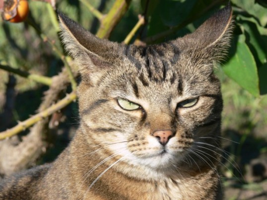 annoyed-tabby-cat