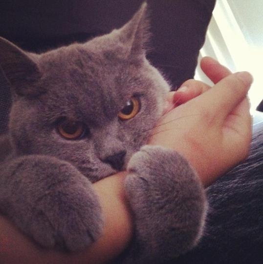 Bad trailer kitty!