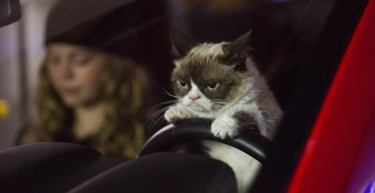Grumpy-Cat-drives-a-car