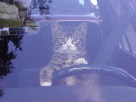 Driving Trailer Kitty