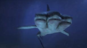 """Vaizdo rezultatas pagal užklausą """"three headed shark"""""""