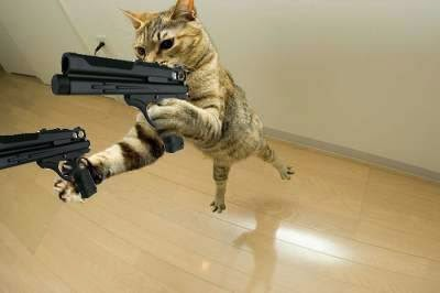 Awwww! This Trailer Kitty loves action!