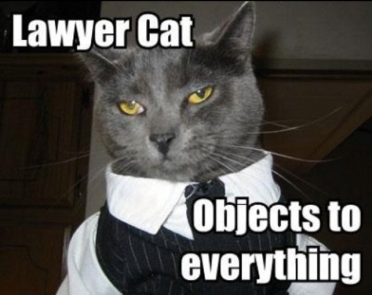 Lawyer Cat
