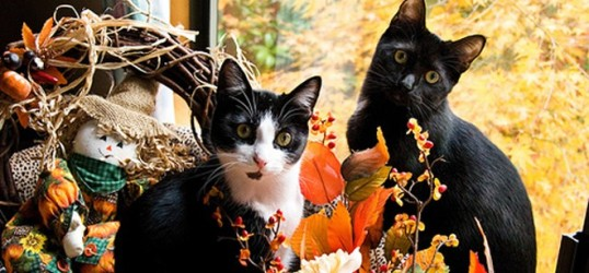thanksgiving-two-cats