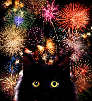 cats-hate-fireworks